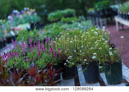 A wide shot of garden nursery container plants on palates