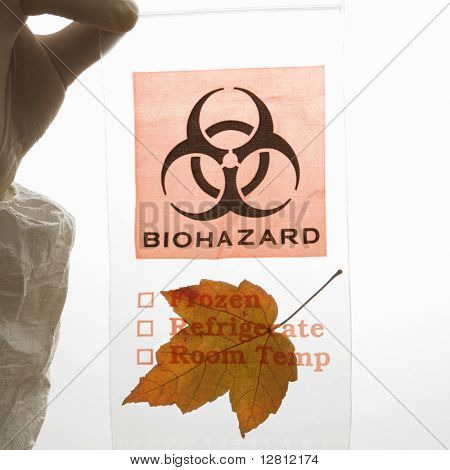 Hand wearing white rubber glove holding plastic biohazard bag containing orange Maple leaf.