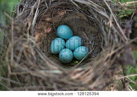 Bird's nest in their natural habitat during the breeding.