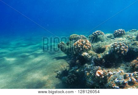 Deep sea and coral reef, coral reef animals, fresh corals at the bottom of the sea, sea ecosystem, coral reef life, colorful corals, yellow corals, green corals, sea landscape, oceanic landscape
