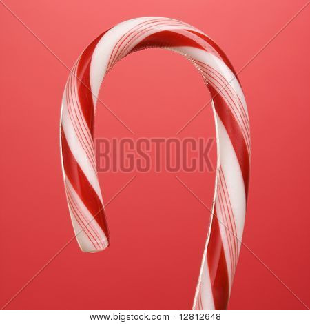 Still life of top half of candy cane.