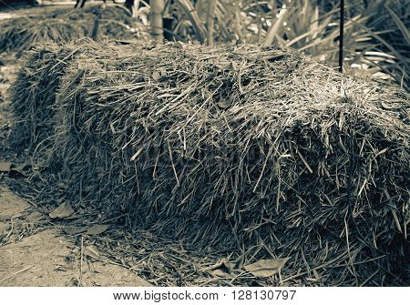 Dried yellow hay or haystack in farm colored filter effect