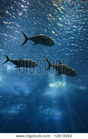 Fish swimming in aquarium in Lisbon, Spain.