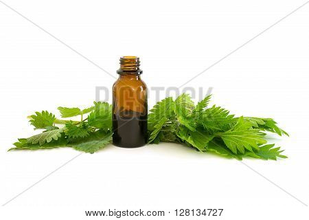 nettle essence in a bottle and fresh branches with leaves isolated with shadows on a white background medicinal herb for health and beauty selected focus narrow depth of field