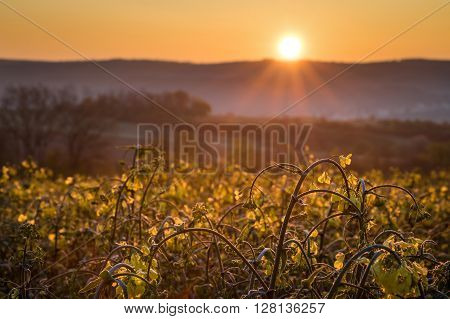 Blooming Field At Sunrise