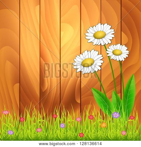 White camomiles. Floral background. White flowers on wood background. With space for text. Vector Illustration