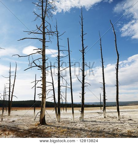 Landscape of dead tress on shoreline at Yellowstone National Park, Wyoming.