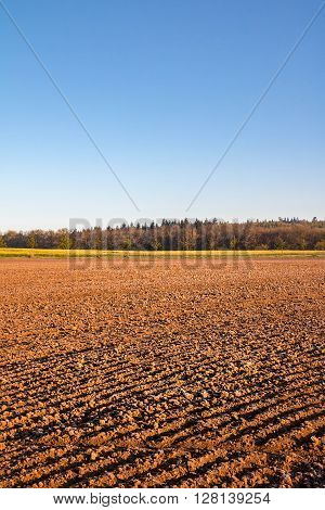 Spring Landscape With Plowed Field And Clear Blue Sky
