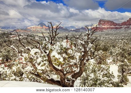 Desert in Sedona, Arizona after heavy snow storm