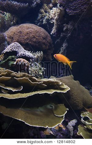 Fish swimming around coral in aquarium in Lisbon, Spain.