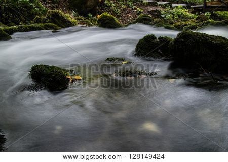 stream in the forest