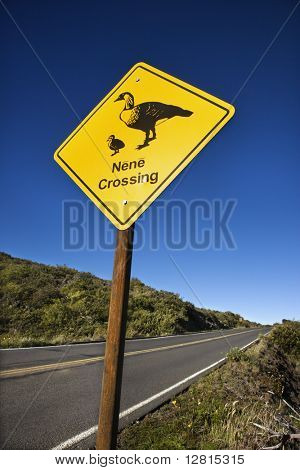 "Shot of ""Nene Crossing"" road sign in Haleakala National Park, Maui, Hawaii."