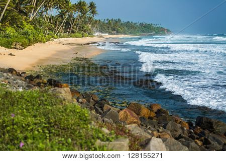 Tropical beach with palm trees and waves