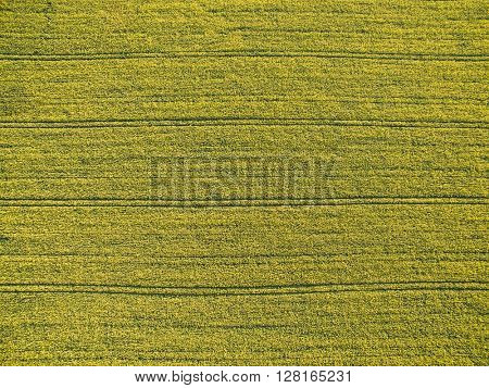 Farmland from above - aerial image of a lush green filed, soft focus