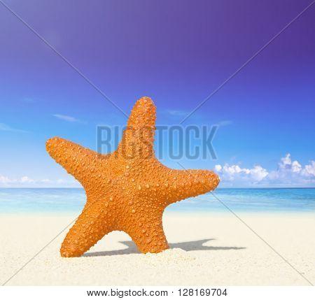 Starfish on a Tropical Beach Concept
