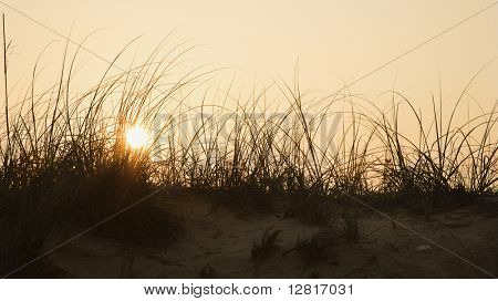 Sunset over beach sand dune on Bald Head Island, North Carolina.