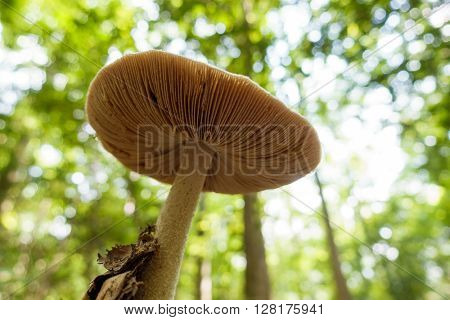 Mushroom seen from underneath in the forest