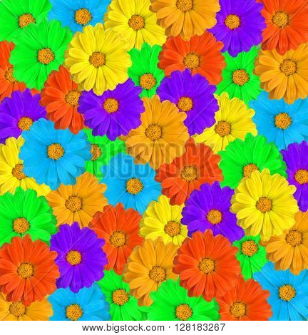 flowers of colours