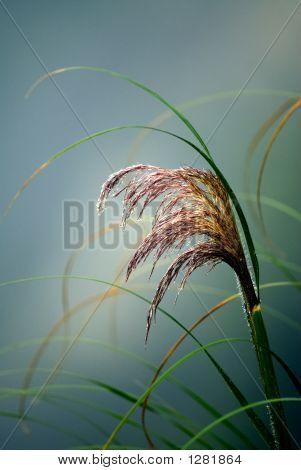 Misty Plant