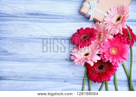 Gerbers and present box on blue wooden background