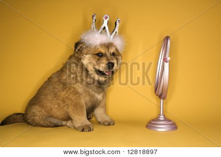 Puppy wearing crown in front of mirror.