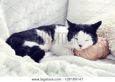 Cat sleeping on pink yarn.