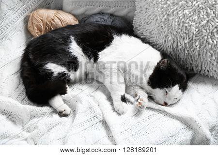 Cat sleeping on white plaid.