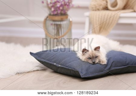 Color-point cat lying on a pillow in living room