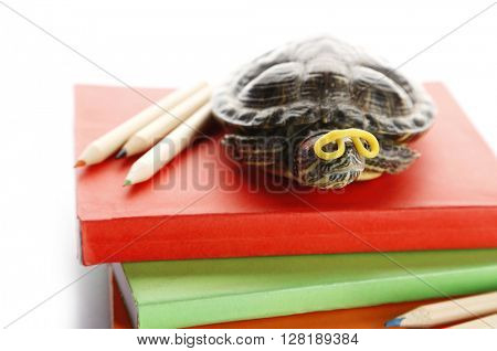 Turtle on pile of colourful books against white background