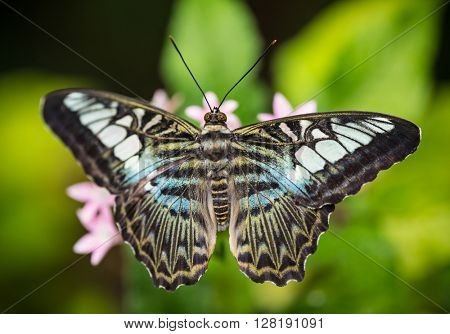 Beautiful exotic butterfly perching on flower. Close-up.