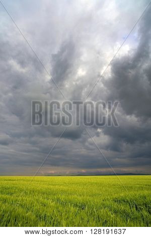 Image of a green wheat field with stormy clouds background