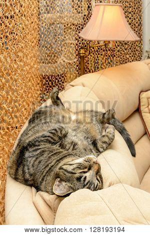 A tubby cat sleeps on soft cozy sofa.