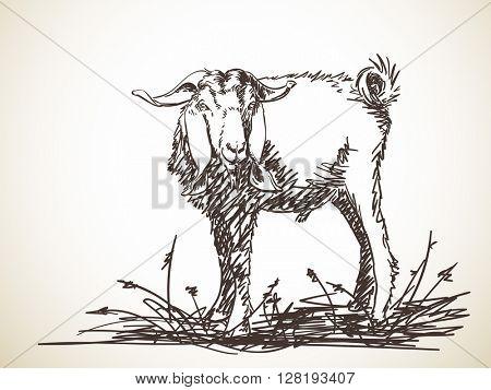 Sketch of goat, Hand drawn illustration
