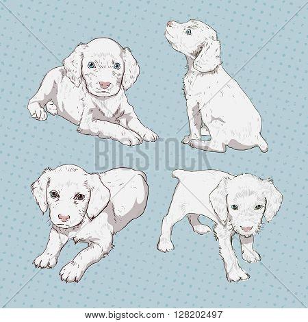 Set of little puppy hand-drawing. Vector vintage illustration