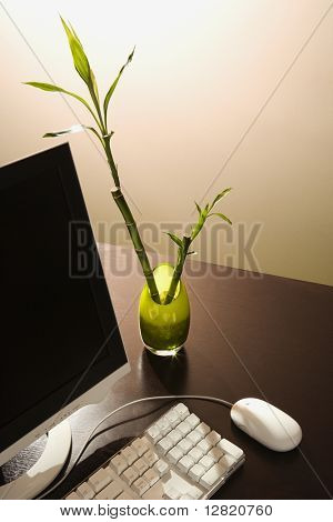 Computer on desk with lucky bamboo in vase.