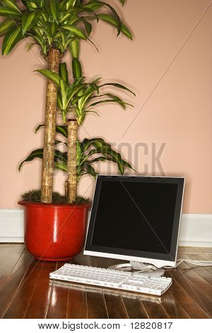 Houseplant and computer on hardwood floor.