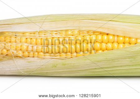Corn on the cob kernels isolated on white background
