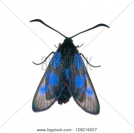 macro photo of black and blue butterfly isolated on white background
