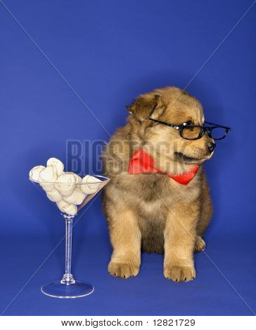 Puppy wearing eyeglasses and bowtie with martini glass full of bones.