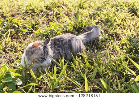 Cute domestic cat in the outdoor.