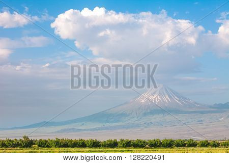 Summer landscape with Ararat mountain and field in foreground seen from Armenia