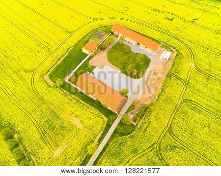 Aerial view to rapeseed fields with farm house and road. Agricultural landscape in Czech Republic, Central Europe.