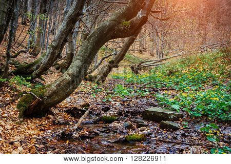 Mysterious forest in wet weather sunlit. Dramatic scene and picturesque picture. Location place Carpathian National Park, Ukraine, Europe. Beauty world. Soft filter. Warm toning effect.