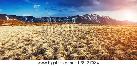 Nice view of the yellow dry grass which glowing by sunlight. Dramatic and picturesque scene. Location place Carpathian, Ukraine, Europe. Beauty world. Retro and vintage style. Instagram toning effect.