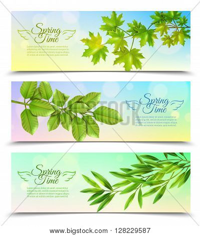 Three horizontal banners with green branches of deciduous trees in sun rays background flat vector illustration