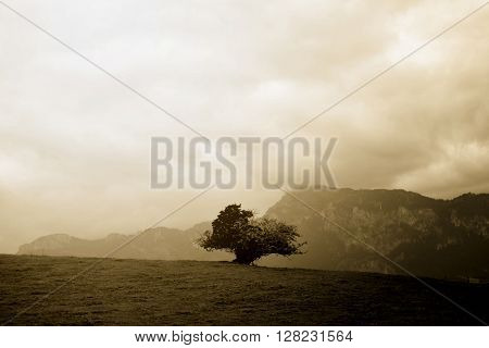 lone desolate tree top the hill in Alps