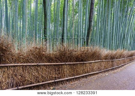 Wide angle of the Arashiyama Bamboo Grove track in Kyoto