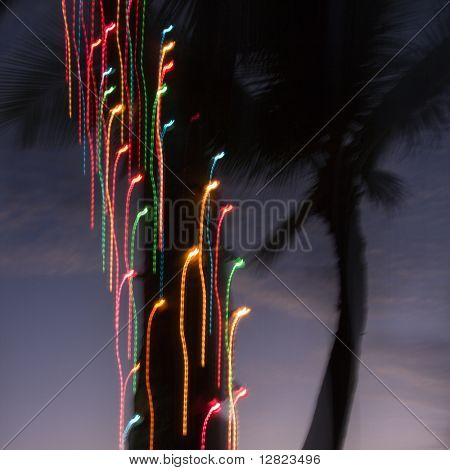Colored lights on palm tree abstracted by camera movement.