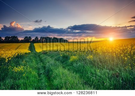 Magnificent views of the green grass and canola field glowing by sunlight. Dramatic picture and picturesque scene. Location place Ukraine, Europe. Artistic picture. Beauty world. Soft filter effect.