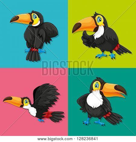 Toucan in four frames illustration